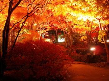姫路城 紅葉 ライトアップ.jpg